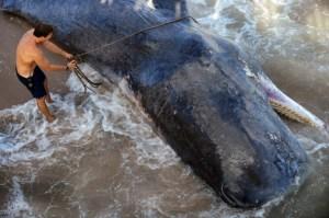 dec 17us_news_florida-whale_fl-630x418