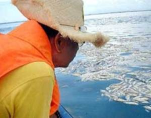 dec 27pangasinan-fish-kill