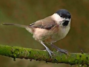 nov 14749708-bird
