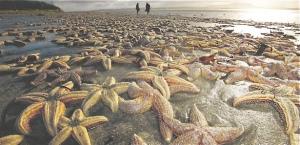 nov 15deadstarfish