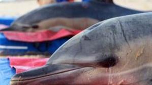 nov 23cape-cod-dolphins-jpg