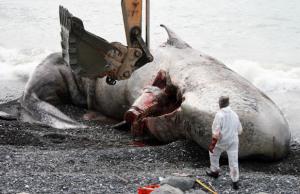28-MEX-whale2.jpg
