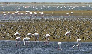 oct 19walvis-lagoon