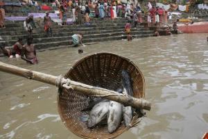 oct 2deadfishindia2