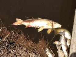 sept 4 deadfishassumptionparish