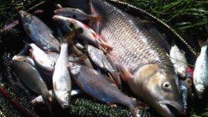 sept 8blackwaterdeadfish