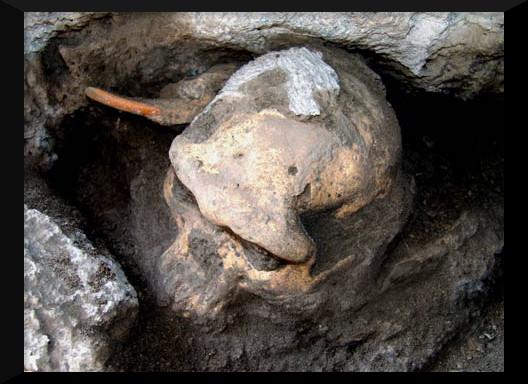Skull-015