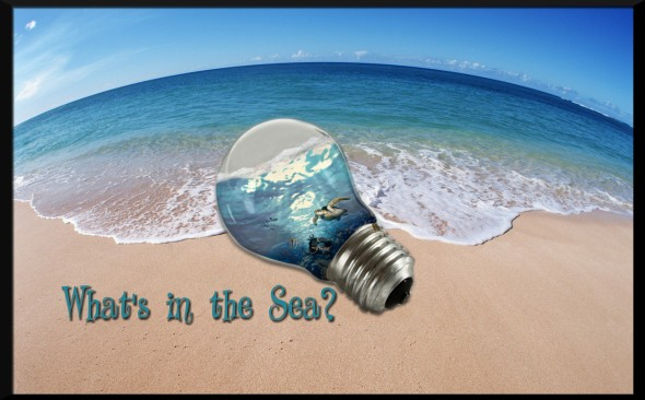 ocean-landscape-pictures-179