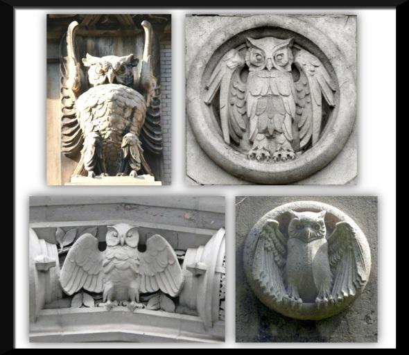 Owl-Photos-