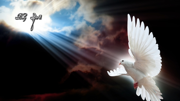 flying-dove-high-definition-wallpaper