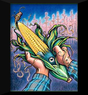 frankenfood-corn1
