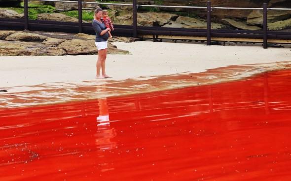 algae-mother-child_2410926k