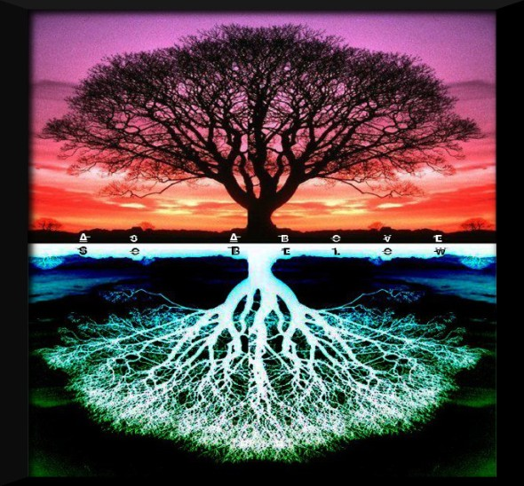 treeoflife42