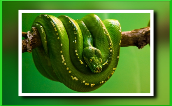 25687-75-snake-wallpaper-green-snake-on-the-branch-free-computer_1920x1080