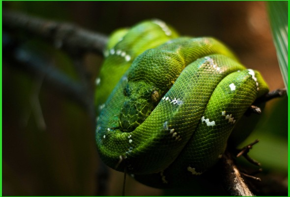 animal-smooth-green-snake_388259