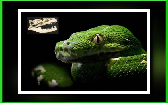 snake-1156-1920x1200
