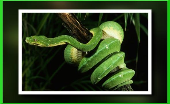 Snake-information-inforyt