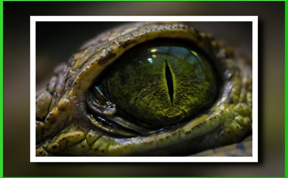 snake_eye-wide