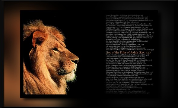 lion_tribe_judah