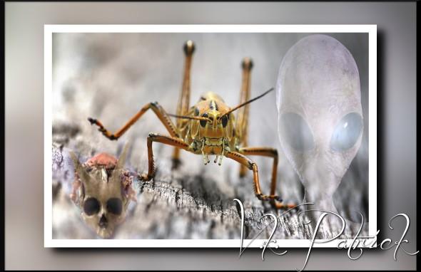 140520-grasshopper-jms-1759_86b5c285a5a498cb7fd4fab4b02467ef